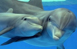 Dolphin and Mum