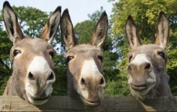 ​Eight Donkeys