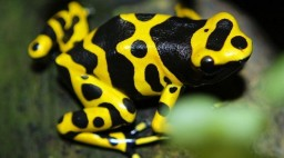 ​The Most Poisonous Animals in the World